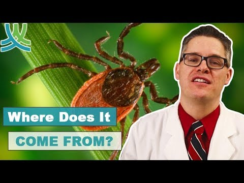 Lyme Disease Symptoms - What Is Lyme Disease?