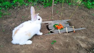 The First Rabbit Trap With Deep Hole by Smart Boy - How To Trap Rabbit That Works 100%