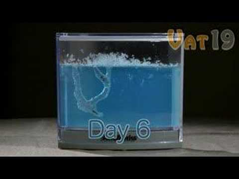 AntWorks Illuminated Ant Farm Gel