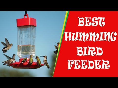 Best 5 Hummingbird Feeder 2018 - Are you make the same mistakes?