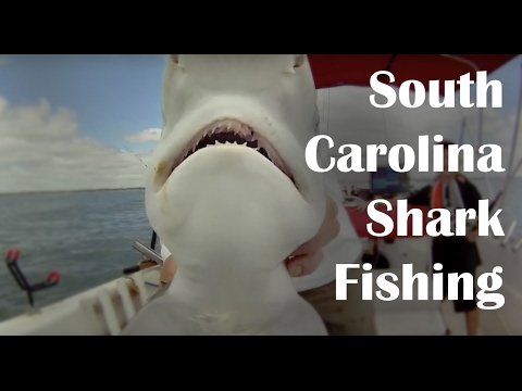 South Carolina Shark Fishing - How to Catch Sharks at the Beach - Fishing for Sharks at the Beach