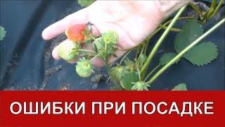 Ошибки при посадке клубники на агроволокно / Органическое земледелие