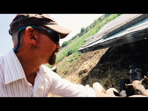 Man Discovers How To Feed Pigs | WITHOUT GRAIN