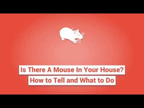 Is There A Mouse In Your House? How to Tell and What to Do