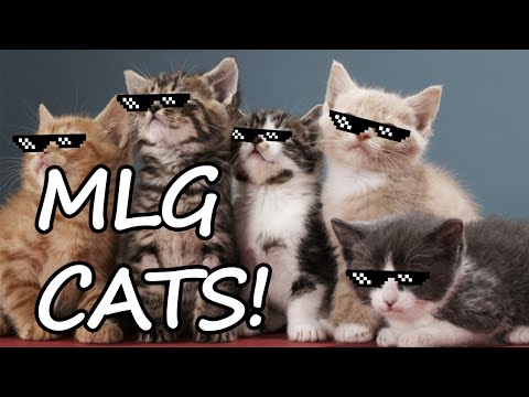 Funny / MLG cat compilation!!! Funny cats MLG edit!