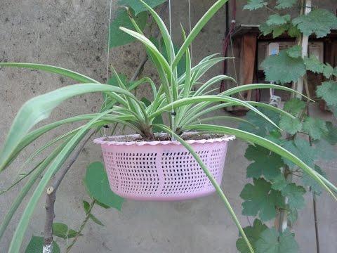 How to Make Hanging Basket Planter | Make Your Own Hanging Baskets | Start to End (Urdu/hindi)