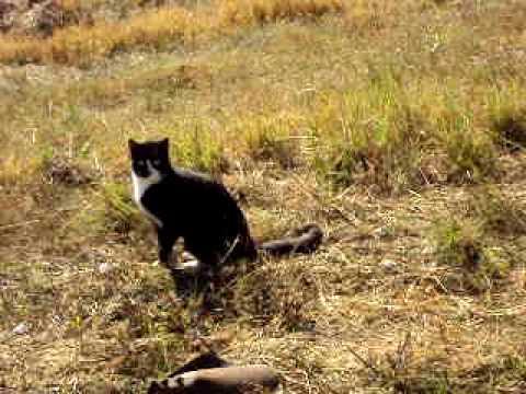 Feral Cat with Broken Leg