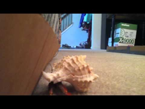 All about hermit crabs by Riley