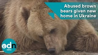 Abused brown bears given new home in Ukraine
