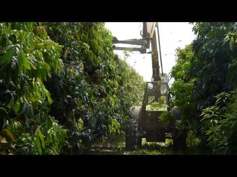 Mango Pruning Technologies,  Israel – August 2015