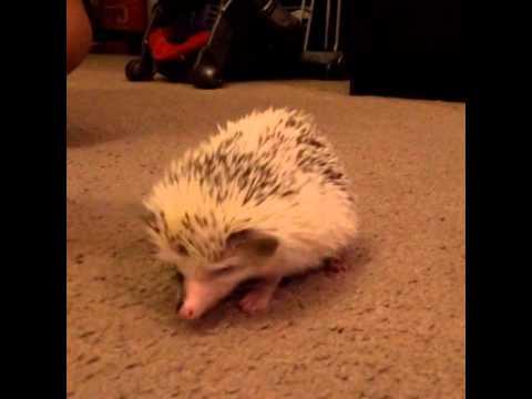 Hedgehog bites finger