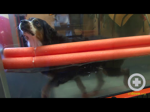 Underwater Treadmill for Dogs - Setting Up