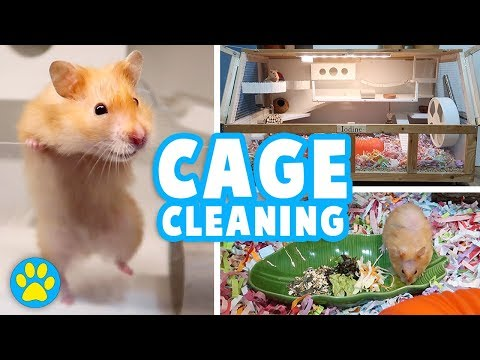 Deep Cleaning Iodine's Cage   Hamster Allergies   Vlog