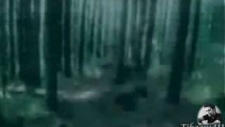 Hunting - The Cullens