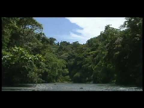 Costa Rica - Sights and Sounds of Corcovado National Park