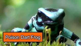 पृथ्वी में सबसे प्यारा लेकिन खतरनाक जानवर || The Most Cutest but Dangerous Animal In The EARTH