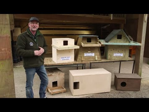 How to Choose the Best Barn Owl Nestbox Design