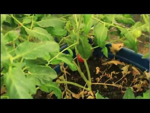 Basement Garden Update 11/26/2011