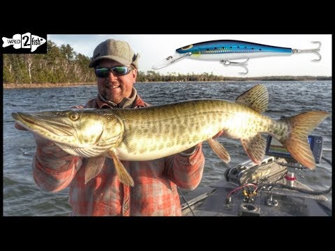 How to Catch Big Fall Musky