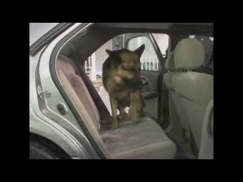 Pet Rider Keeps Dog Hair and Dirt off Your Car Seats! You're Welcome
