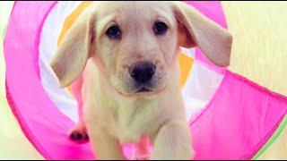 Sponsor a Puppy - Hamlet