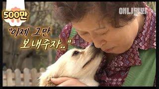 땅 속에 묻힌 새끼를 다시 파내고 어미 사월이가 한 행동은.. ㅣ Mother Dog Digs Out Her Dead Puppy From The Ground To Do 'This'