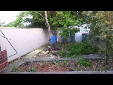 Total Fail on cutting a tree