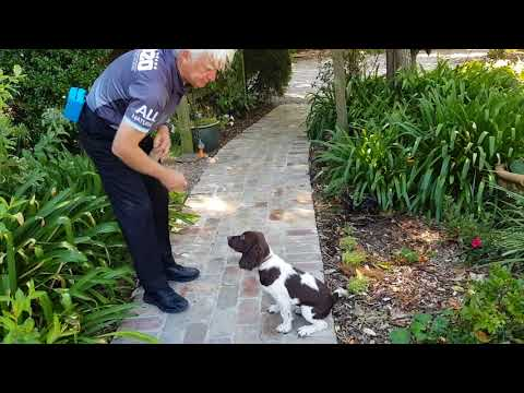 Macca's next training session to become a detection dog.