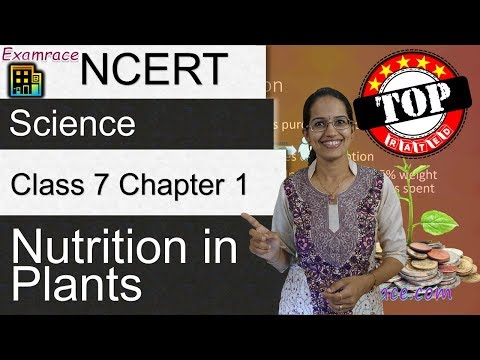 NCERT Class 7 Science Chapter 1: Nutrition in Plants (NSO/NSTSE/Olympiad)