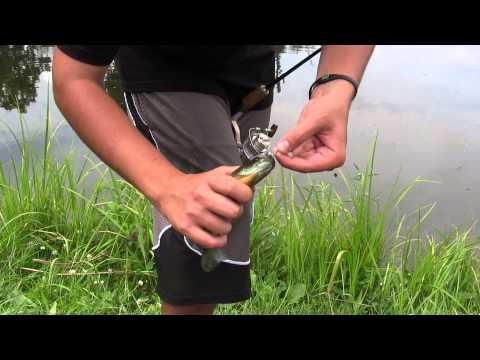 Pond fishing bluegills
