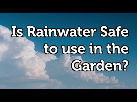 Is the Rainwater Collected in a Rain Barrel Safe to Use in your Garden?