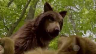Download ″Bitten″ TV Series - Howl Video