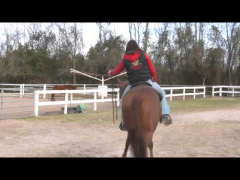 How to Train a Horse to Neck Rein