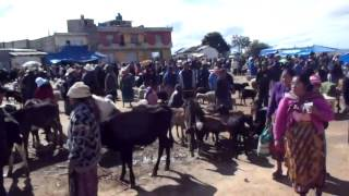 San Francisco El Alto - Animal Market - Outrageous