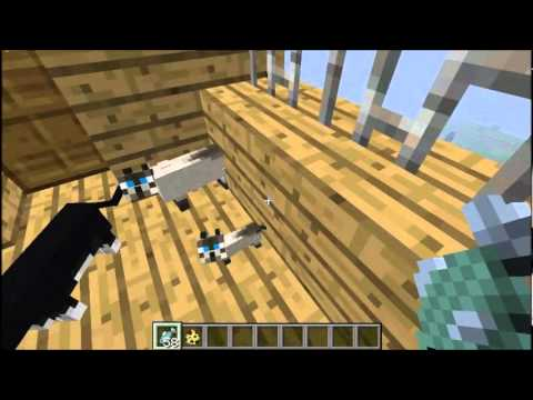 Minecraft: Kitty Cats