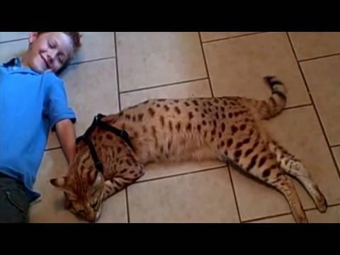 A Beautiful Relationship - Savannah Cat MAGIC and Andreas Stucki.