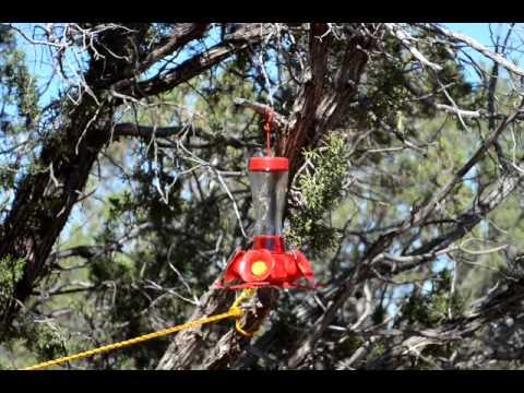Hummingbirds at my feeder