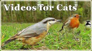 Video für Katzen