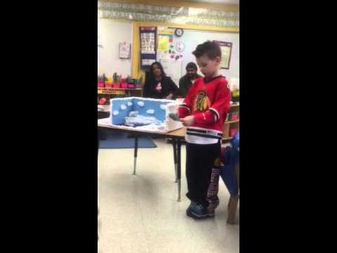 Asher's Polar Bear Project (Kindergarten)