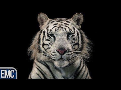 10 Animals That Are Going Extinct