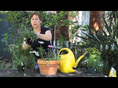 How to Plant Wildflowers in Containers : Garden Space