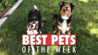 Best Pets of the Week   May 2018 Week 3