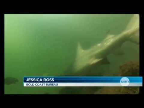 Canal sharks