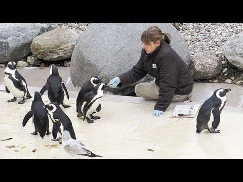 Live at the Toronto Zoo   Zoo Crews