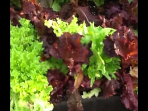 How to Grow a Vegetable Garden in Your Back Yard, Deck or Patio Using Fabric Raised Beds