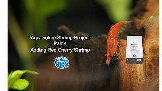 Aquasolum Shrimp Tank Project Part 4 Fincasters Episode 116