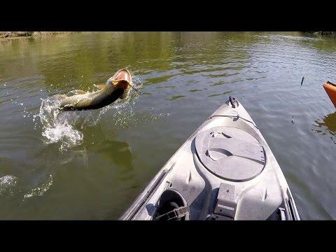 Big Musky Caught From A Kayak