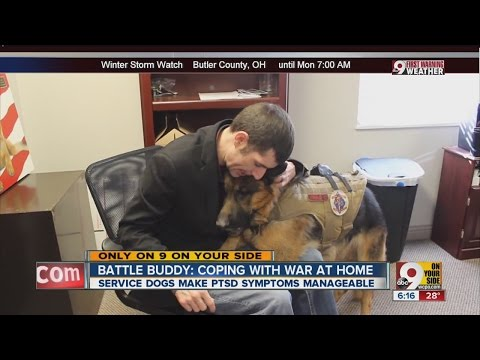 'Battle Buddy' dogs help veterans with PTSD
