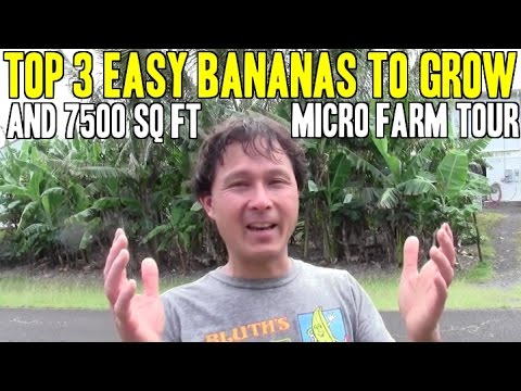 Top 3 Easy Bananas to Grow & Residential Micro Farm Tour
