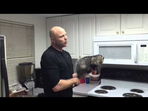 Healthy Cooking With Opossums